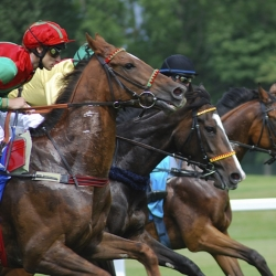 Your Thorough Guide In The 2019 Preakness Stakes Online Betting